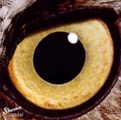 【聞き逃し厳禁!】Sherbetsの「natural」は日本で一番過小評価されているアルバム